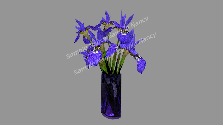 3D Modeling Iris Flower
