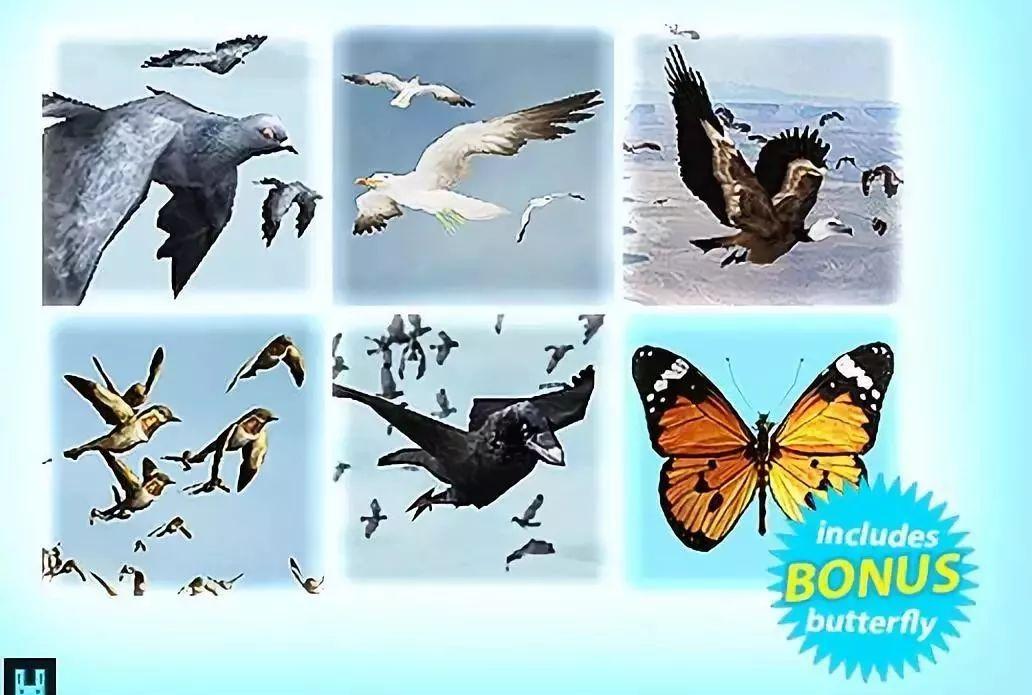 Bird Flock Bundle介绍