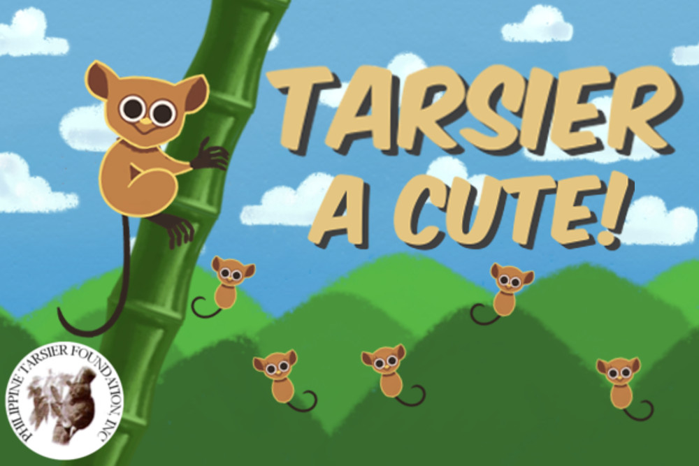 Tarsier A CUTE!