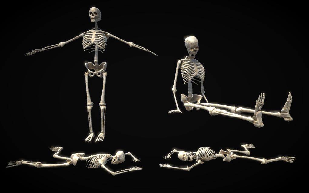 PBR Rigged Skeleton