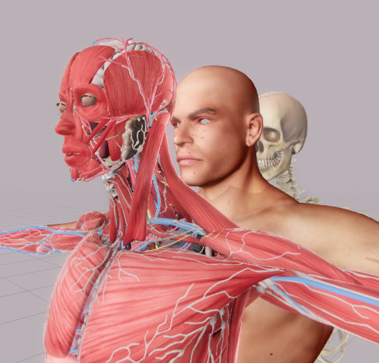 OrganShow器官展示