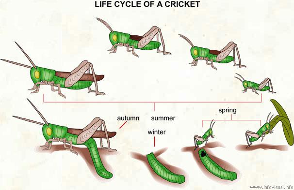 Jimminy Crickets : ML-Agents