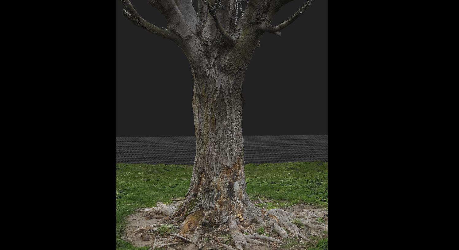 Realistic 3d Tree