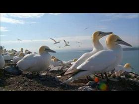 BirdyGaze VR